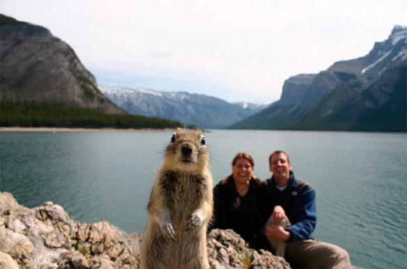 Scene-stealing-squirrel