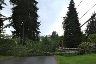 Tree down up the street