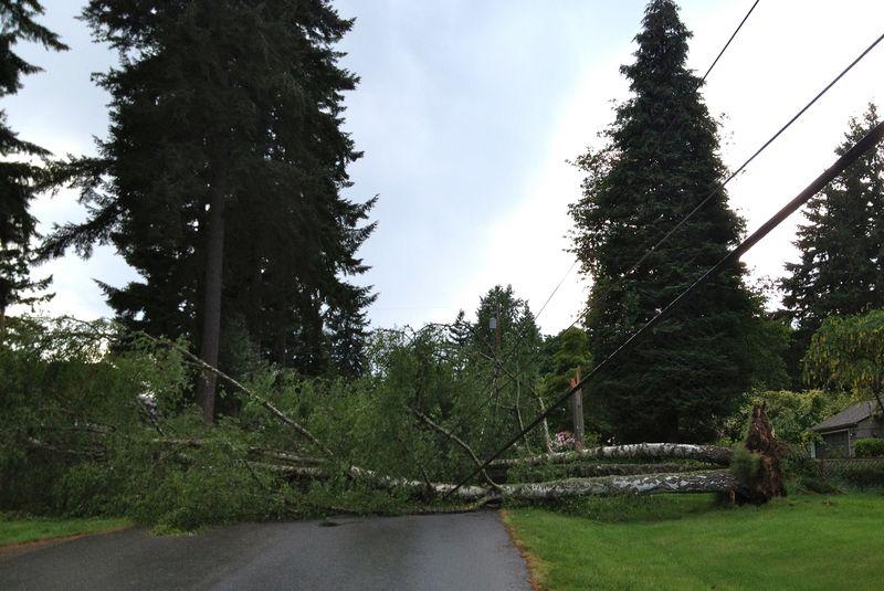Tree-down-crop