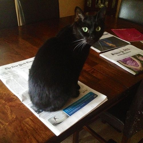 Usurper (Flex sitting atop New York Times