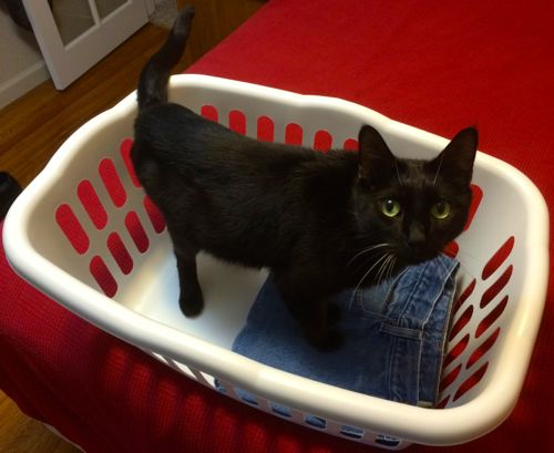 Laundry helper