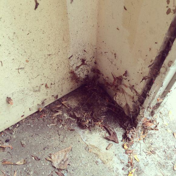 Storage space or spider spa?