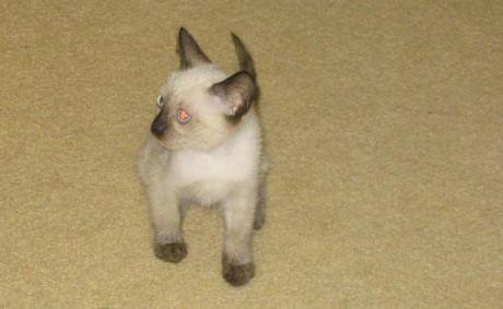 Kat's kitty kat :-)